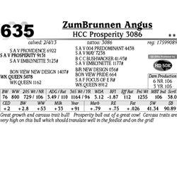 Lot 635 - HCC Prosperity 3086 - ZumBrunnen Angus
