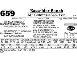 Lot 659 - KFS Concensus7229-3344 - Kasselder Ranch