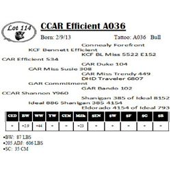 Lot 114 - CCAR Efficient A036