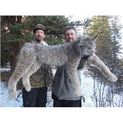 5-DAY LYNX HUNT IN BRITISH COLUMBIA FOR 1 HUNTER