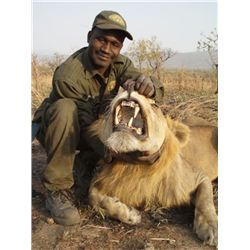 9-DAY LION HUNT IN CAMEROON FOR 1 HUNTER