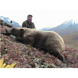 8 TO 10-DAY GRIZZLY BEAR HUNT ON HORSEBACK FOR 1 HUNTER IN ALASKA