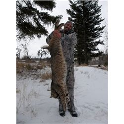 Bobcat or Lynx Hunt with Bearcat Outfitters