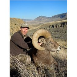 BC Resident Full Curl California Bighorn Sheep Hunt with Ambler`s Bighorn Country Guiding