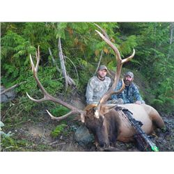 10-day Archery Vancouver Island Roosevelt Elk Hunt for One Archery Hunter