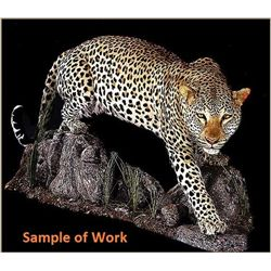 Custom Taxidermy for a Leopard Mount
