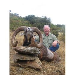 5-day Gold-Medal European Mouflon Hunt in Spain for One Hunter and One Observer