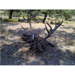 5-day Portugal Iberian Red Stag Hunt For One Hunter and One Observer