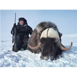 6-day Nunavut Barren Ground Muskox Hunt for One Hunter