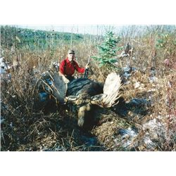 9-day British Columbia Moose or Mountain Goat Hunt for One Hunter