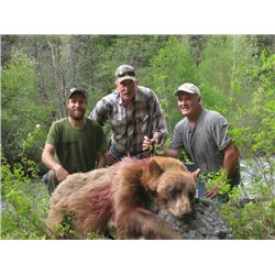 5-day Idaho Bear and Wolf Hunt for Two Hunters