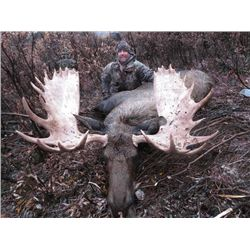 7-day British Columbia Western Canadian Moose Hunt for One Hunter