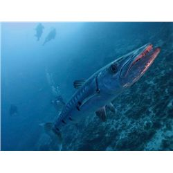 9-day/8-night Belize All Inclusive Fishing and Diving Package for Six Anglers
