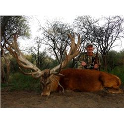 10-day Argentina Red Stag and Boar Hunt with Dove and Pigeon Shooting for Two Hunters
