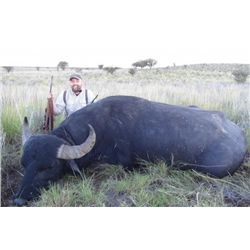 6-day Argentina Water Buffalo, Blackbuck, Boar and Wingshooting Hunt for Four Hunters