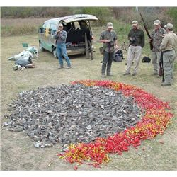 5-day Argentina Dove, Pigeon, Partridge Hunt for Eight Hunters