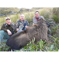 5-day New Zealand Free-Ranging Himalayan Tahr Hunt for One Hunter and One Observer