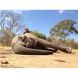 7-day Zimbabwe Tuskless Elephant Hunt for One Hunter and One Observer