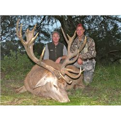 5-day Argentina Red Deer, Blackbuck, Multi-horn Sheep and Dove Hunt for 3 Hunters
