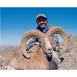 5-day Pakistan Afghan Urial Hunt for One Hunter
