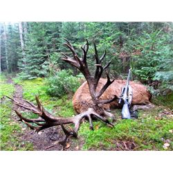 3-day Quebec Red Stag up to 399 for Two Hunters