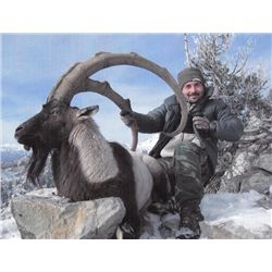 5-day Turkey Bezoar Ibex and Eurasian Boar Hunt for One Hunter and One Observer