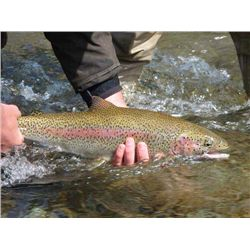 7-day Alaska Salmon and Rainbow Trout Fishing Trip for One Angler