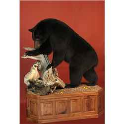 Black Bear Taxidermy Mount