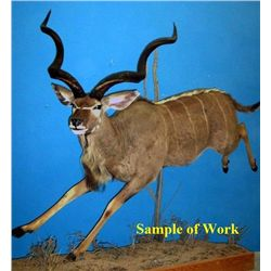 Custom Taxidermy Work