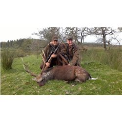 5-day Ireland Free-Ranging Sika Deer Hunt for One Hunter and One Observer