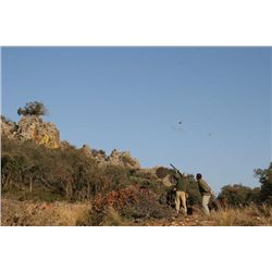 1-day/2-night Spain Red Legged Partridge Hunt for Ten Hunters and Ten Observers