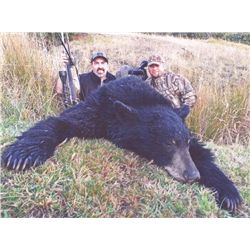 3-day California Black Bear Hunt for One Hunter
