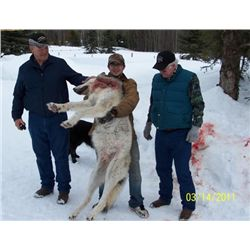5-day British Columbia Wolf Hunt for One Hunter