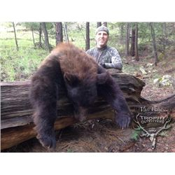 5-day New Mexico Black Bear Hunt for One Hunter