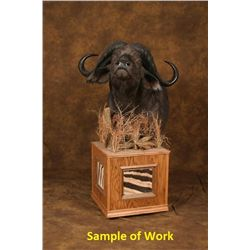 Custom Floor Pedestal for Cape Buffalo