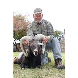 5-day Texas Mouflon Hunt for One Hunter