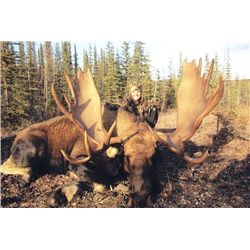 7-day Trophy Yukon Moose, Black Bear and Wolf Hunt for One Hunter