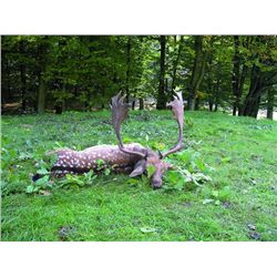 5-day Austria Driven Wild Boar, Red Stag and Fallow Deer Hunt for Two Hunters