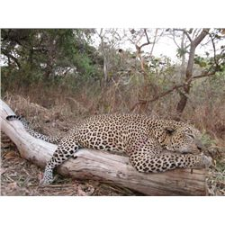 14-day Tanzania Leopard and Plains Game Hunt for One Hunter and One Observer