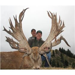 5-day New Zealand Gold Medal Red Stag Hunt up to 420 SCI for Two Hunters and Two Observers