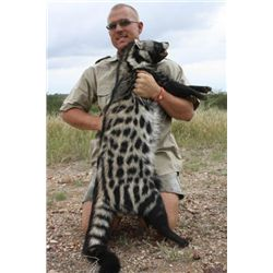 5-Day Wild Cat and Plains Game Hunt for One Hunter in South Africa - Includes Trophy Fees