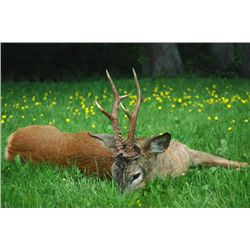 5-Day Roebuck Hunt for One Hunter in South Sweden - Includes Trophy Fee