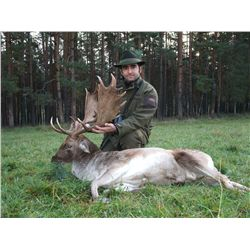 5-Day Driven Wild Boar and Fallow Deer Hunt for Two Hunters in Austria - Includes Trophy Fees