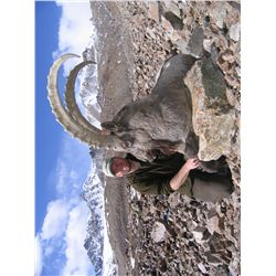 7-Day Mid-Asian Ibex Hunt for One Hunter in the Kyrgyz Republic - Includes Trophy Fee