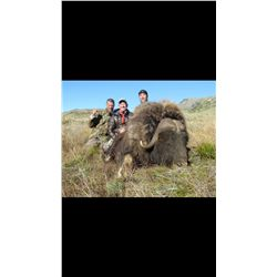 5-Day Musk Ox or Caribou Hunt (Hunter's Choice) for One Hunter in Greenland - Includes Trophy Fee