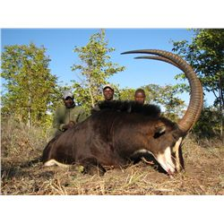 7-Day Sable Hunt for One Hunter in Zimbabwe - Includes Trophy Fee