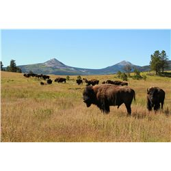3-Day American Bison Hunt for One Hunter and One Non-Hunter in New Mexico - Includes Trophy Fee