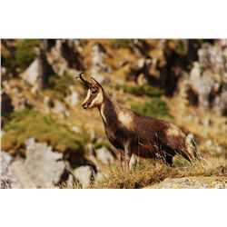 4-Day Cantabrian Chamois Hunt for One Hunter in Spain - Includes Trophy Fee