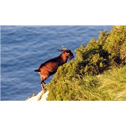 4-Day Balearian Goat Hunt for One Hunter and One Non-Hunter - Includes Trophy Fee and VIP Sightseein