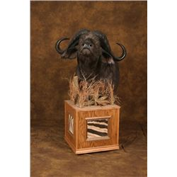 Custom Cape Buffalo Floor Pedestal
